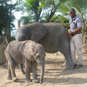 bee-with-elephants-1024x1024