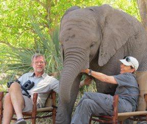 scott-debra-elephant